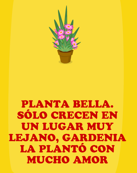 Regalo; Planta bella